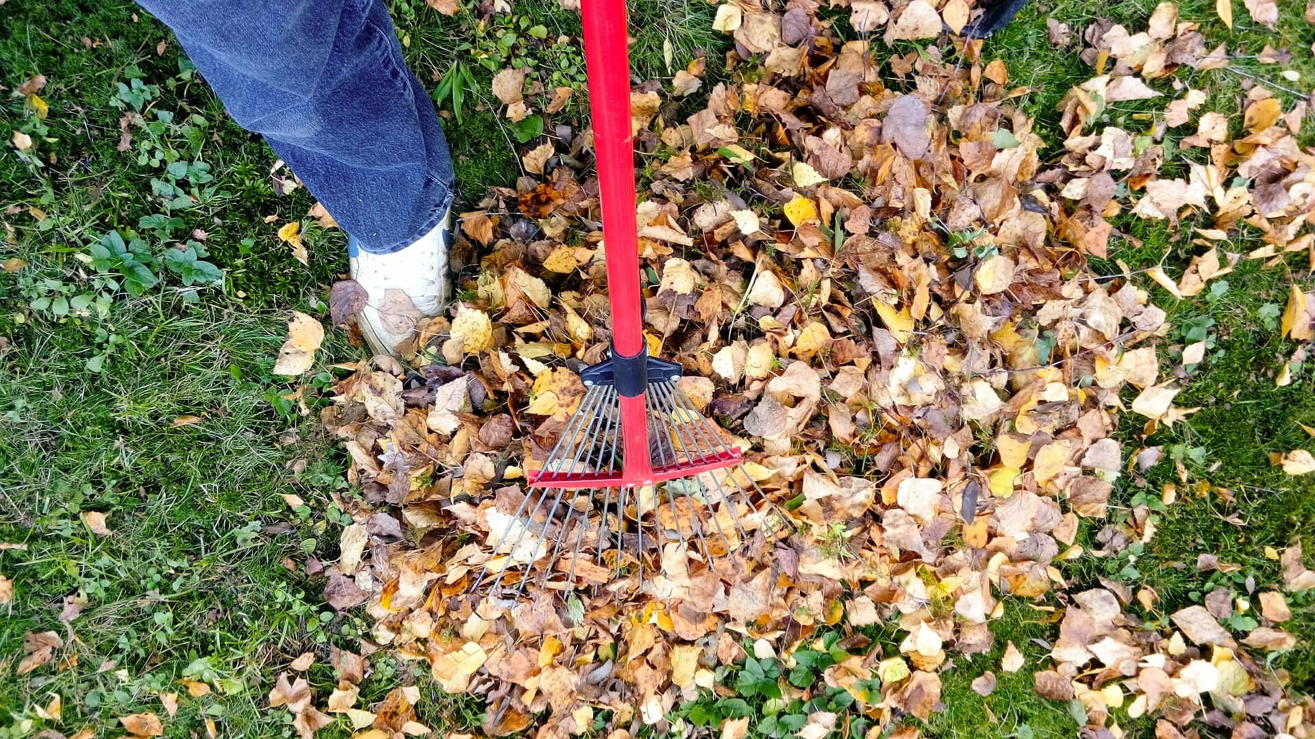 Aduna frunzele din gradina in noiembrie