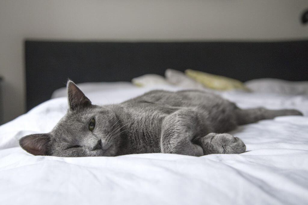 Pisica in apartament – pro si contra