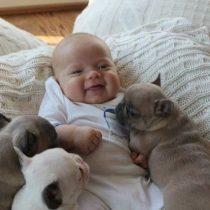 Cele mai prietenoase animale