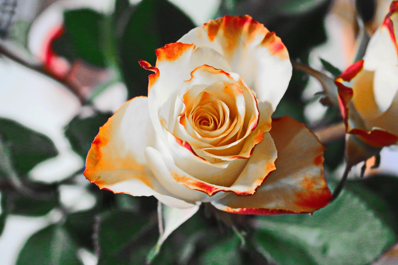 florile pentru vară